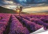 PMP 4life. XXL Poster Lavendel Feld | 140x100cm | hochauflösendes Wand-Bild Baum, Natur Poster extra groß, XL Fotoposter | Wand-deko Bild Landschaft Bäume Blumen Wald