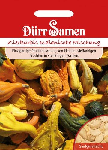Kürbissamen - Zierkürbis Indianische Mischung von Dürr-Samen
