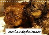 Bolonka Babykalender 2018 (Tischkalender 2018 DIN A5 quer): Ein gelungener Kalender mit...