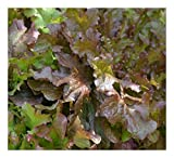 Premier Seeds Direct ORG068 - Semillas para verduras (orgánico)