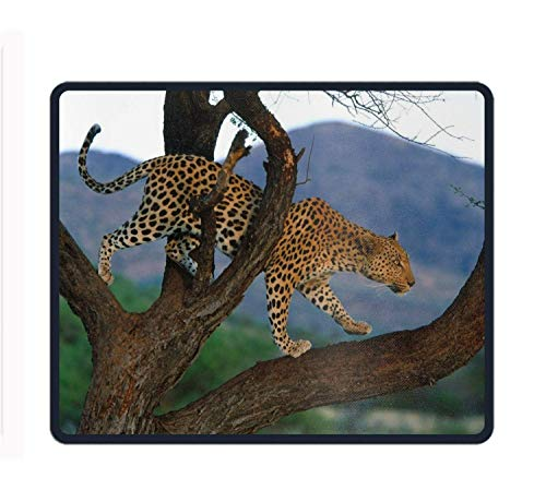 Gaming Mouse Pad - Animal Leopard Cats - Design Stitched Edges Waterproof Pixel-Perfect Accuracy Optimized for All Computer Mouse Sensitivity and Sensors - Lux Leopard