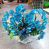 100 Stück Phalaenopsis Orchidee Zimmer Orchidee Blumenmeer pflegeleicht langblühend Bonsai Garten Balkon(Blau)