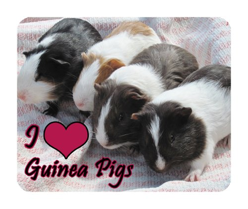 guinea-pigs-mouse-mat-wildlife