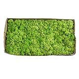 Yw-Flower Muschio Naturale, Muschio di Renna Norvegese, Muschio Finlandese, Muschio Naturale, conservato e conservato, 19 Colori, 500 Grammi,D