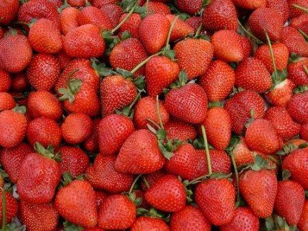 20-graines-rouge-fraises