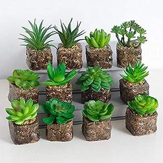 Flyes 12 Estilos Mini Plantas Suculentas Artificiales Plantas Decorativas de Cactus Cactus Plantas Faux Potted (Aleatorio)