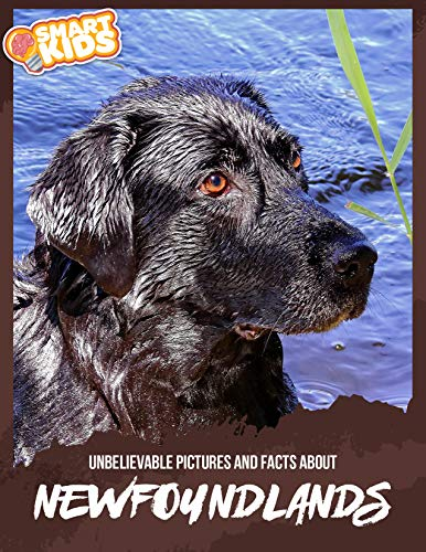 Unbelievable Pictures and Facts About Newfoundlands (English Edition)