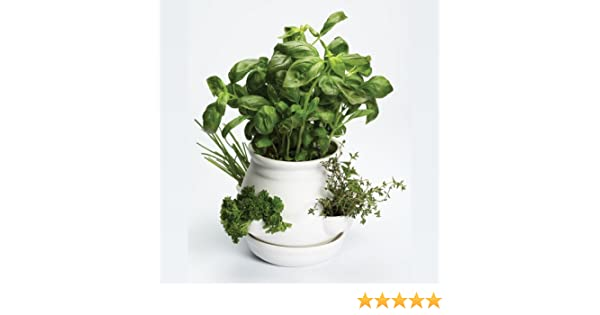 JPD Plants Apple Mint Basil Magic White and Mushroom Herb Collection