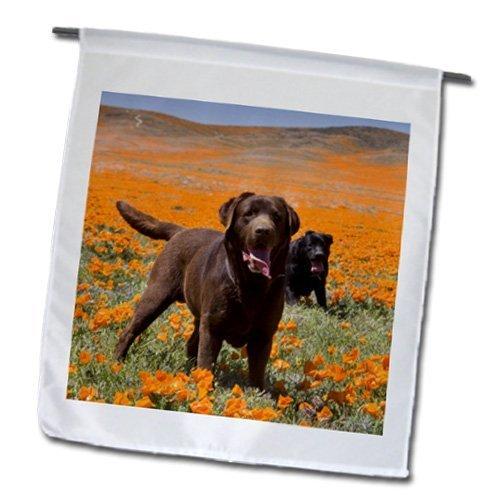 Two Labrador Retriever Dogs, California Zandria Muench Beraldo 30,5x 45,7cm, decorativo double Sided Garden Flag