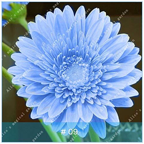 100pcs gerbera varietà di colori bonsai pianta del fiore familygarden crisantemo facile da coltivare regalo bellissimo: 9