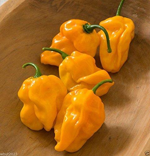 PinkdoseNuMex Suave, Pfeffer, Habanero, Chili-Orange (OG) fruchtiges Aroma, ein Hauch von Heat-30 Seed