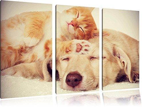 Gattino e cucciolo dorme 3 pezzi picture tela 120x80 immagine sulla tela, XXL enormi immagini completamente Pagina con la barella, stampe d'arte sul murale cornice gänstiger come la pittura o un dipinto ad olio, non un manifesto o un banner,