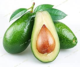 Generic 2016 10Pcs New Rare Green Avocado Seed Very Delicious Pear Fruit Seed Very Easy Grow For Home Garden