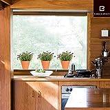 Fenstersticker Lavendelbüsche in der Provence - Trägerfolie 25 x 70 cm - 3-teilig, ergibt Motivgröße etwa 90 x 25 cm