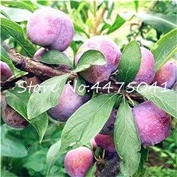 Pinkdose 10 Stück Rosaceae Prunus Cerasifera Bonsai Zierpflanze Kirschpflaume Strauchbaum, Outdoor Weit angebaute Myrobalan Pflaume Frucht: 9