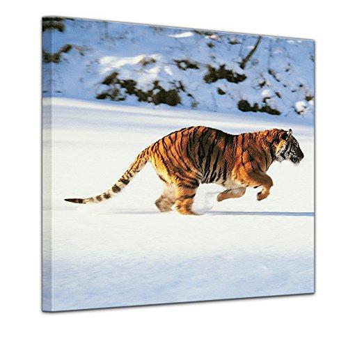 Bilderdepot24 Immagine su telaio a cunei Tigre - 80 x 80 cm - Già montato sul telaio, Stampa artistica intelaiata e pronta da appendere