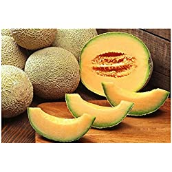 Premier Seeds Direct MEL03 Cantaloupe Herz aus Gold MelonenSamen (Packung mit 100)