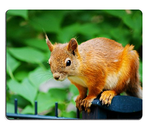 mousepads-squirrel-on-the-fence-in-front-of-a-forest-image-id-20334154-by-liili-customized-mousepads