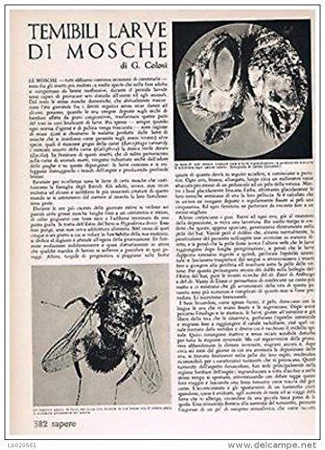 g-colosi-temibili-larve-di-mosche