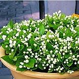 Semillas de 20pcs White Jasmine Bonsai Semillas de flores de jazmín árabe aromático Planta de buen olor perennes Semillas en