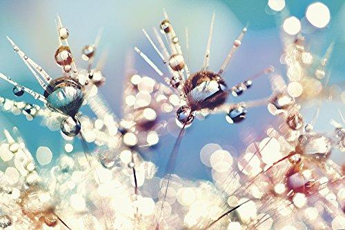 Artland Qualitätsbilder I Wandtattoo Wandsticker Wandaufkleber 60 x 40 cm Botanik Blumen Pusteblume Foto Bunt C1FO Pusteblume Regenbogentropfen