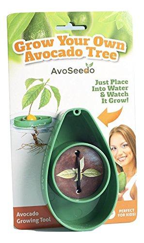 # Avoseedo–Grow Your Own Avocado Tree, kit per coltivare il tuo albero di avocado confronta il prezzo online