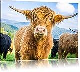 Niedlicher Blick einer Kuh an der Weide, Format: 100x70 auf Leinwand, XXL riesige Bilder fertig gerahmt mit Keilrahmen, Kunstdruck auf Wandbild mit Rahmen, günstiger als Gemälde oder Ölbild, kein Poster oder Plakat