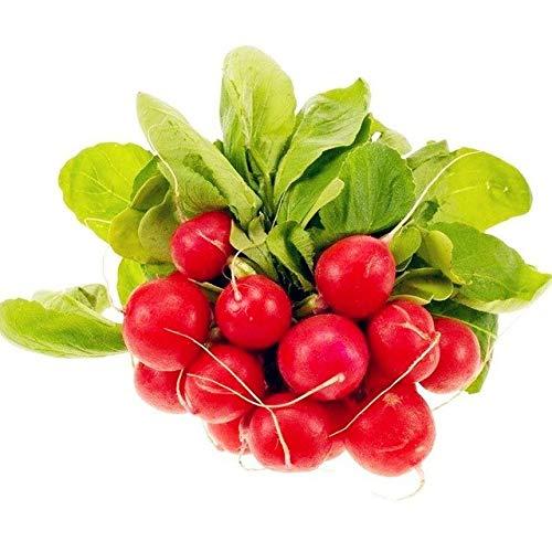 Pinkdose Cerise Radis rouge Radis bonsaïs Juicy Raphanus sativus bio Balcon Fruits et légumes bricolage jardin Fournitures 50 pièces: 1