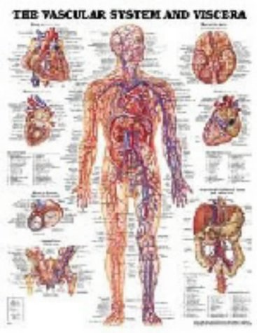 The Vascular System and Viscera by Anatomical Chart Company (2001-01-01)