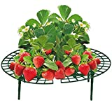 Buri 5er-Set Erdbeer-Reifer Erdbeerstütze Pflanzenhalter Gitterablage Schneckenschutz