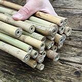 Bambusstäbe - Bambusrohre 105 cm/15-17 mm für Insektenhotel - Pflanzenstütze