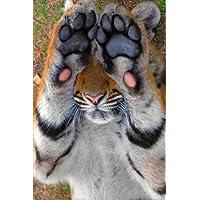 Camera Shy Tiger Cub Journal - Camera Shy