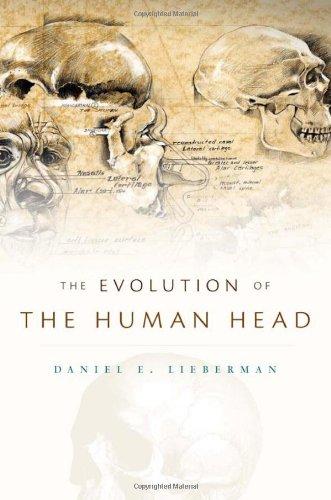 The Evolution of the Human Head por Daniel E. Lieberman