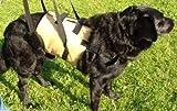 Tiffys Gehhilfe für mittlere Hunde die perfekte Unterstützung beim Laufen oder Treppensteigen Größe M 61-74cm Körperumfang. Aus deutscher Fertigung - hoher Tragekomfort, robustes und abwaschbares Material