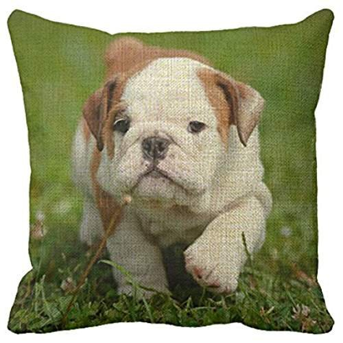 Preisvergleich Produktbild Richess Bulldog Decorative Pillow Covers Cushion Throw Pillow