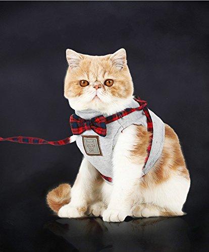 M&m Easy Kostüm - Lager Show 1x Verstellbarer Katzen/Kitty/Kitten Weste Geschirr und Leine Set, Pet Jacke Kostüm Appeal für Ohne Ziehen und Easy Walking, Grün, M, Grau
