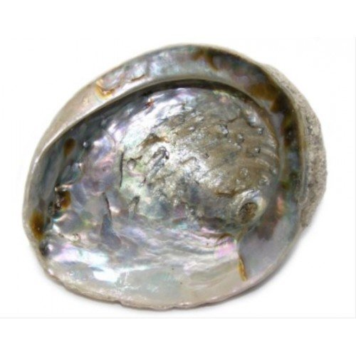 gifts-and-guidance-abalone-shell-for-sage-smudging-or-display-small-4