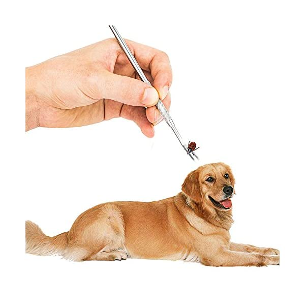 Tick Tweezers, tweezers tick remover, tick tweezers pet, dog tick tweezers, Tick Removal Tool, Professional Tick Tweezers for Dogs/ Cats/ Horses/ Humans, Pack of 3 8