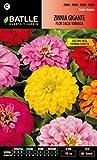 Semillas Batlle 097276BOLS - Zinnia Gigante Flor de Dalia variada