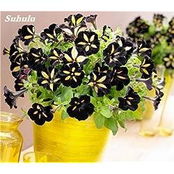 50 PC Petunia Blumensamen Petunien Garten Bonsai Balkon Petunia Hybrida Blumen-Samen Zierpflanzen für den Hausgarten 9