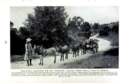 c1920-timber-wood-donkeys-england-farm-holt-fleet