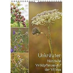 Unkräuter - Nützliche Wildpflanzen auf der Wiese (Wandkalender 2019 DIN A4 hoch): Nützliche Wildpflanzen auf der Wiese (Monatskalender, 14 Seiten ) (CALVENDO Natur)