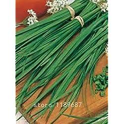 Vistaric 100 Stück/Beutel Bonsai Berg Azalea - Rhododendron simsii Satsuki Mischfarben-Blumen-DIY Haus & Garten Pflanzen samen nur