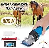 Cesoie elettriche in Lana 800W 6 velocità elettrica Cavallo Cesoia Animal Hair Clipper Fattoria Trimmer Shaver Cut for Cammello Mucca Cavallo Capra Spina w/Box