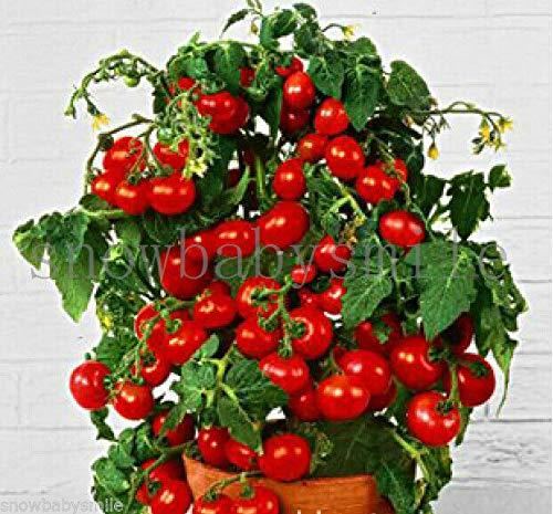 HATCHMATIC Jardin de légumes graines Non OGM Bricolage Environ 100 Particules