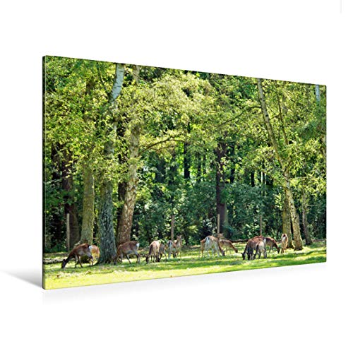 Premium Textil-Leinwand 120 cm x 80 cm quer Ein Motiv aus dem Kalender Die Schönheiten der Wälder - Stimmungsvolle Impressionen