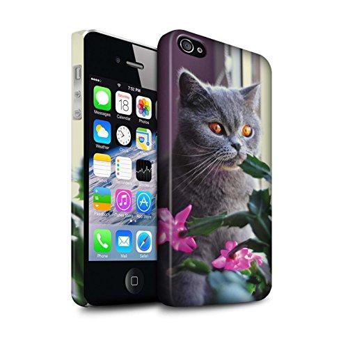 Stuff4® Matte Snap-On Hülle/Case für Apple iPhone