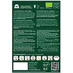 Must-Espresso-Italiano-96-Capsule-Compatibili-Dolce-Gusto-T-Verde-in-Foglie-China-Jasmine-6-confezioni-da-16-capsule