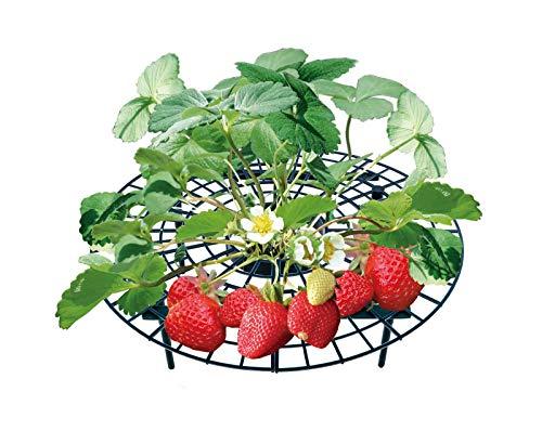 Soporte protector UPP® para fresas y frutas maduras, tipo rejilla
