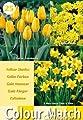 Greenbrokers Ltd Colour Harmony Blumenzwiebeln, Mix mit 25 Frühlingsblumen, Gelb von Greenbrokers Limited - Du und dein Garten